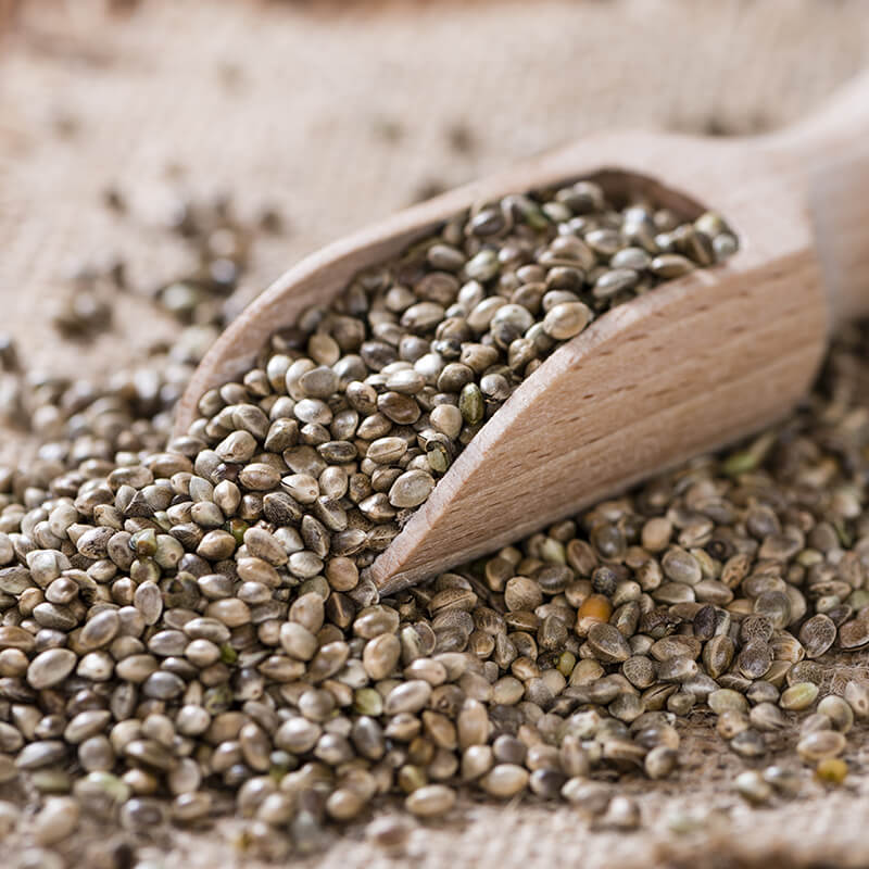 Hemp Nuts - Whole Hemp Seeds